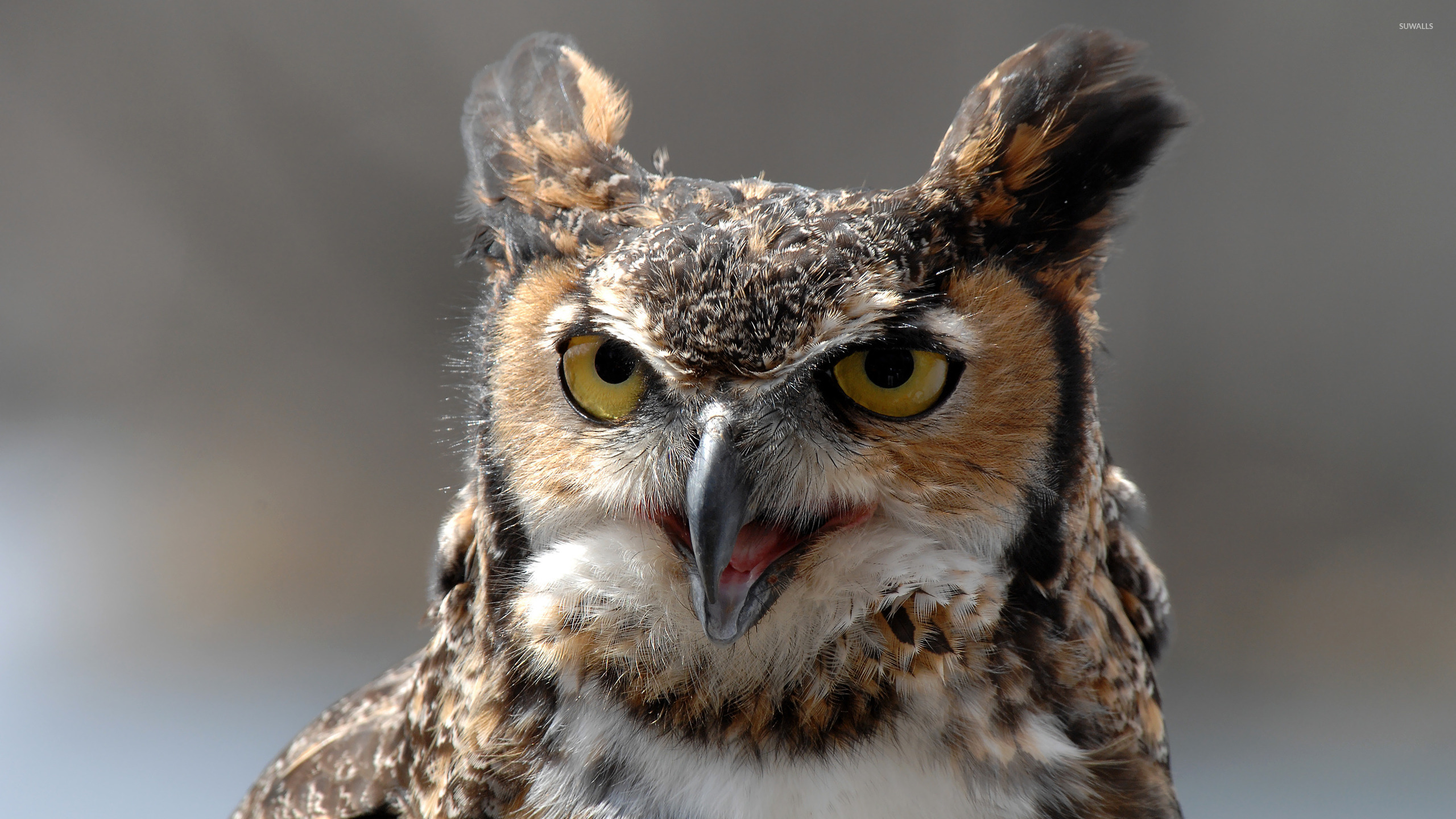 great horned owl 3 wallpaper animal wallpapers 31189