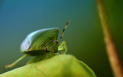 Green bug wallpaper