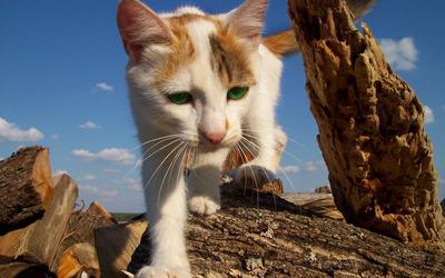 Green eyed cat wallpaper