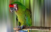Green macaw on a tree branch wallpaper 2560x1600 jpg