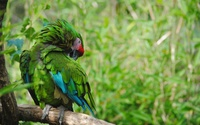 Green parrot wallpaper 2560x1600 jpg