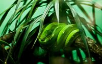 Green snake [2] wallpaper 2560x1600 jpg