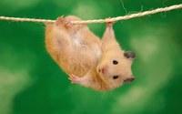 Hamster wallpaper 1920x1200 jpg