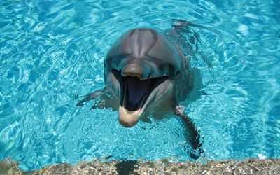 Happy dolphin in the pool wallpaper