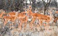Herd of deers wallpaper 2880x1800 jpg