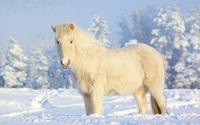 Horse [6] wallpaper 2560x1600 jpg