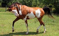 Horse [7] wallpaper 2560x1600 jpg