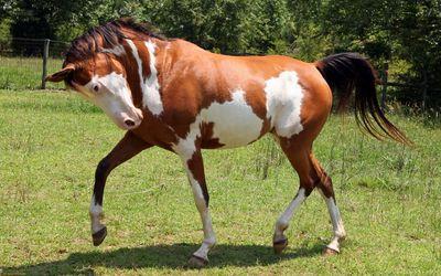 Horse [7] wallpaper
