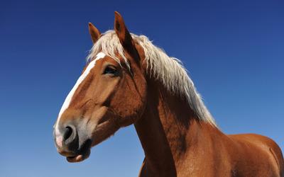 Horse [9] wallpaper