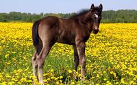 Horse [13] wallpaper 1920x1080 jpg