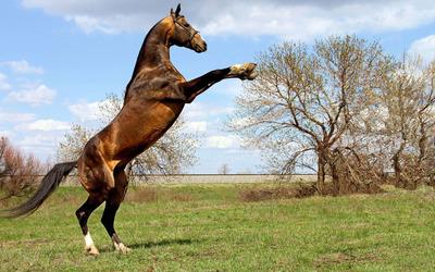 Horse [8] wallpaper
