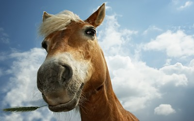 Horse [12] wallpaper