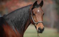 Horse [10] wallpaper 2560x1600 jpg