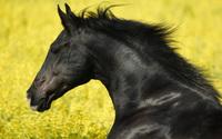 Horse [4] wallpaper 1920x1200 jpg