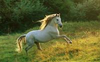 Horse wallpaper 1920x1200 jpg