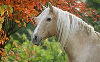 Horse [5] wallpaper 1920x1200 jpg