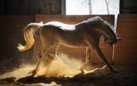 Horse [3] wallpaper 2560x1600 jpg