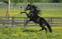 Horse [2] wallpaper 1920x1200 jpg