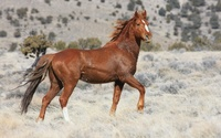 Horse colt on the field wallpaper 2560x1600 jpg