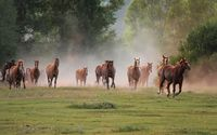 Horse herd wallpaper 2560x1600 jpg