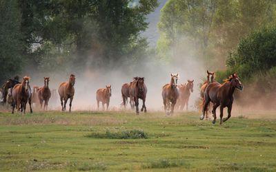 Horse herd wallpaper