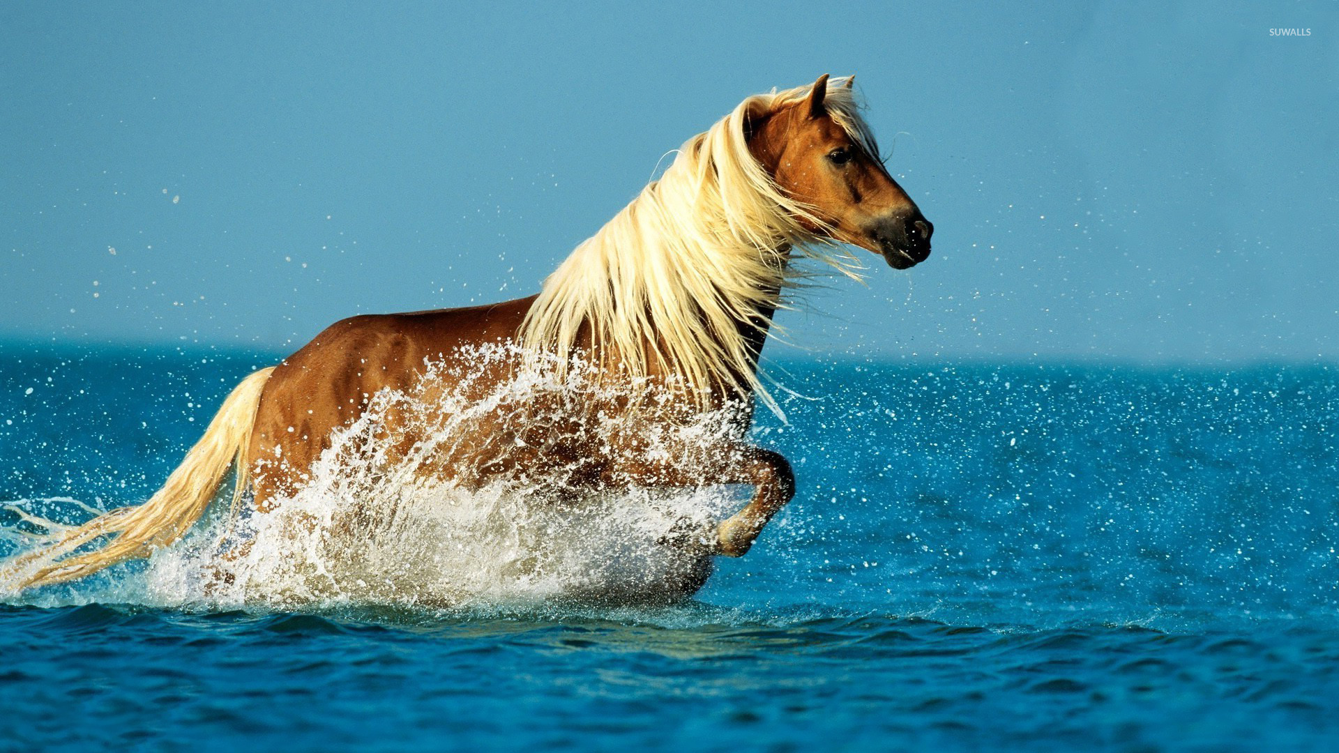 horse in the water wallpaper animal wallpapers 22267