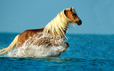 Horse in the water wallpaper