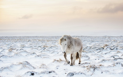 Horse in winter wallpaper