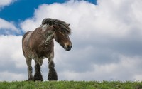 Horse on top of the hill wallpaper 1920x1080 jpg