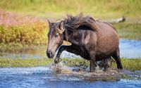 Horse trying to cross the water wallpaper 1920x1200 jpg