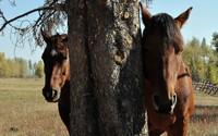 Horses [7] wallpaper 2560x1600 jpg