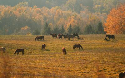 Horses [12] wallpaper