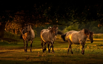 Horses [10] wallpaper
