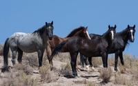 Horses [9] wallpaper 2880x1800 jpg