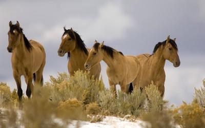 Horses [8] wallpaper