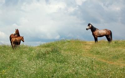 Horses [14] wallpaper