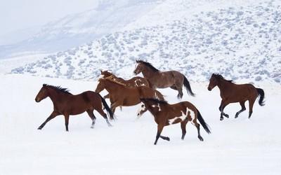 Horses [4] wallpaper