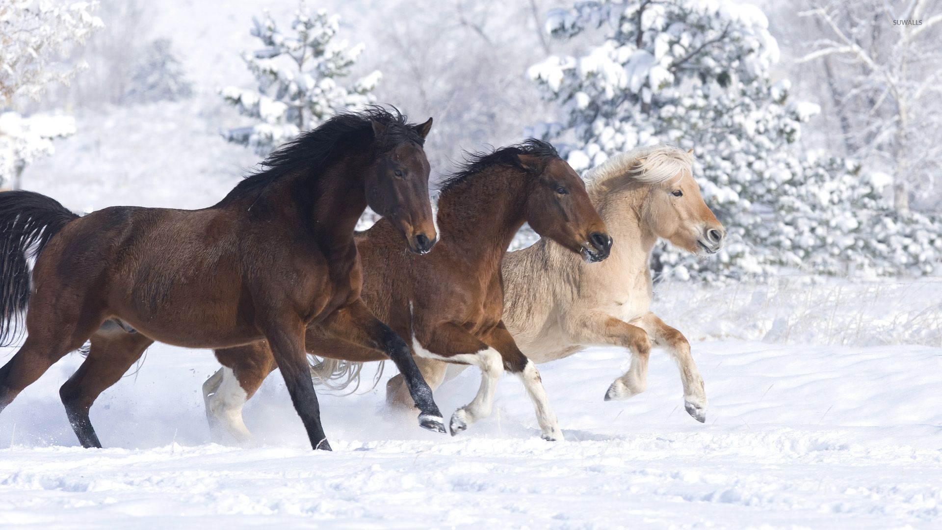 Horses Enjoying A Beautiful Winter Day Wallpaper Animal