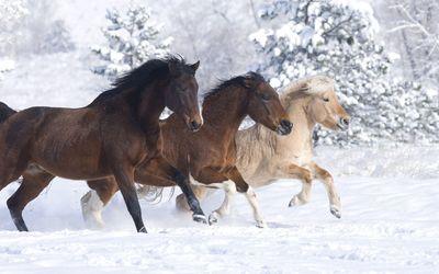 Horses enjoying a beautiful winter day wallpaper