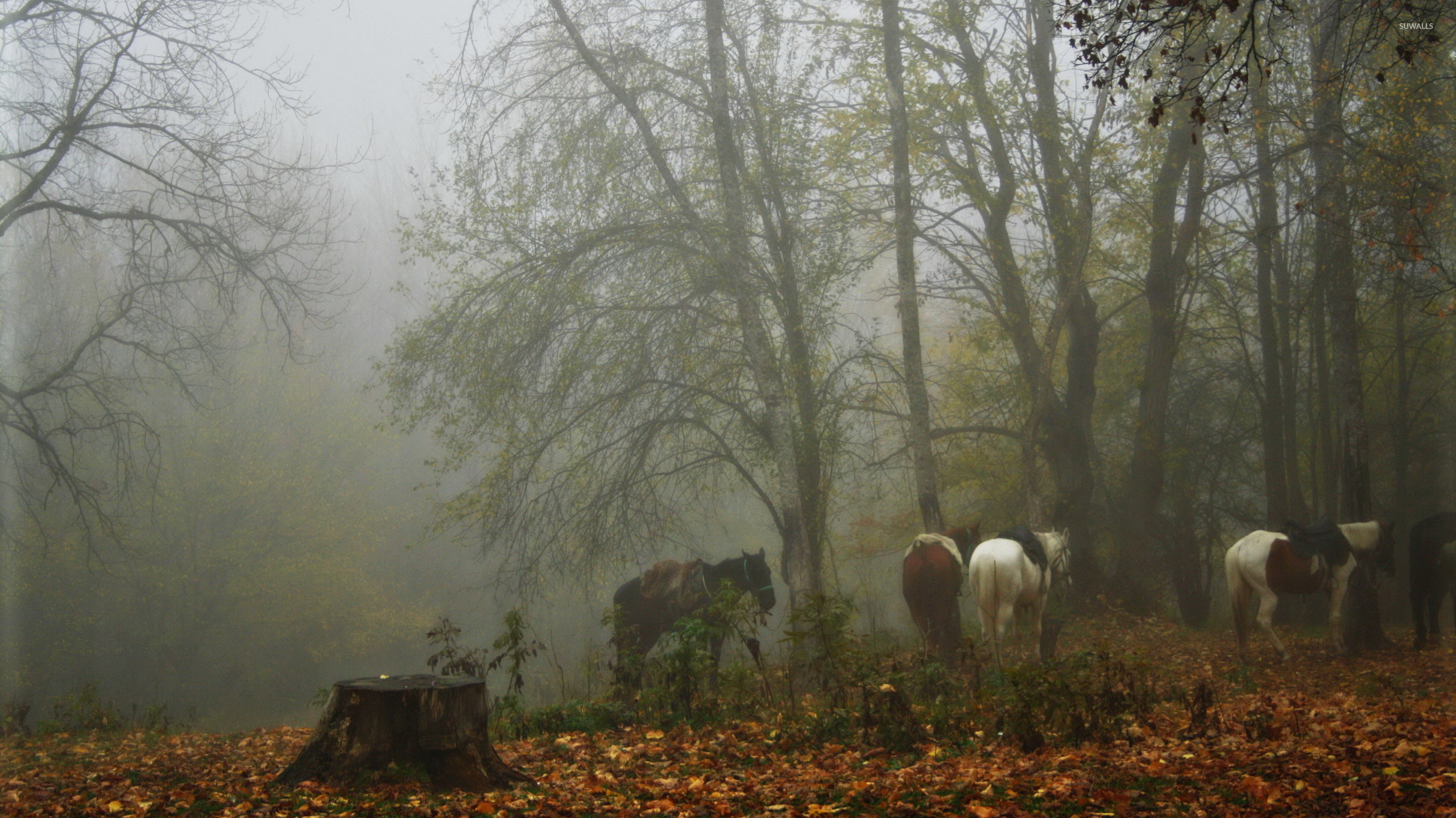 horses in a foggy forest wallpaper animal wallpapers