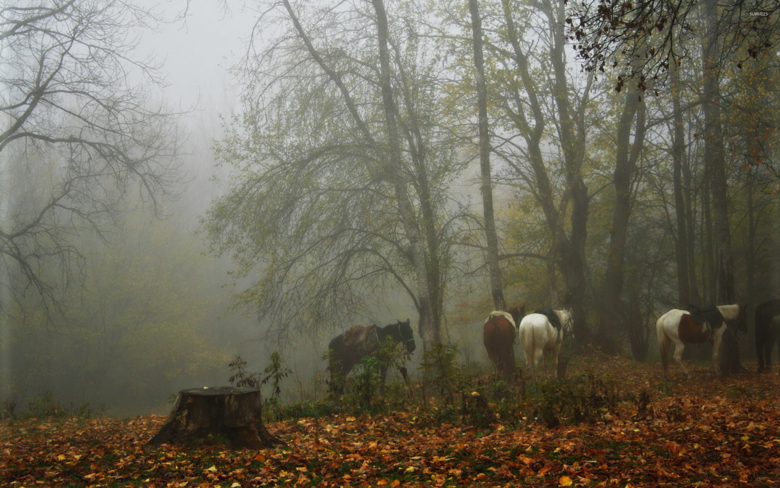 foggy forest by a - photo #30