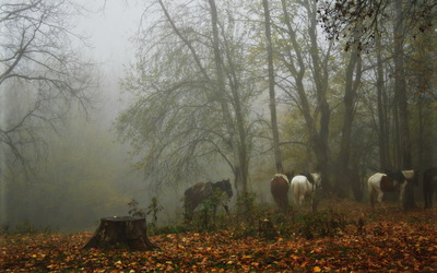 Horses in a foggy forest wallpaper