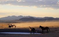 Horses in desert wallpaper 1920x1080 jpg