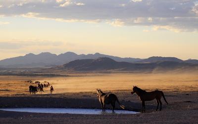 Horses in desert wallpaper