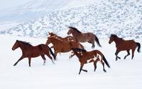 Horses in snow wallpaper 1920x1080 jpg