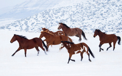 Horses in snow wallpaper