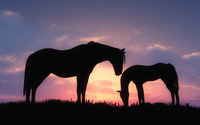 Horses in the grass in the sunset wallpaper 3840x2160 jpg