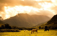 Horses on the field on a clouded day wallpaper 1920x1080 jpg