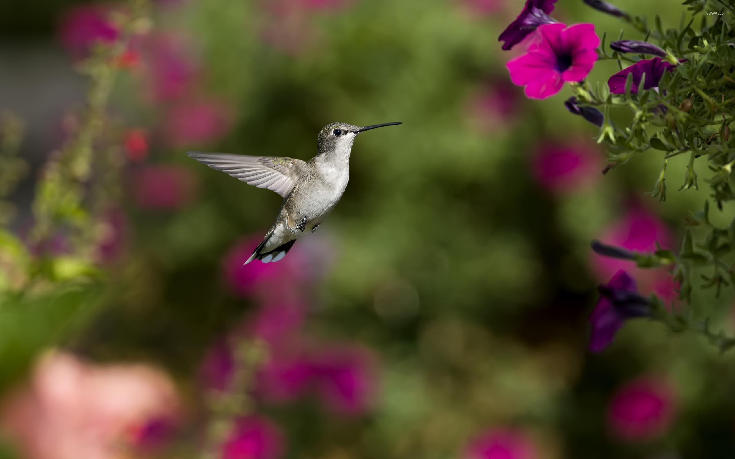 колибри цветок без смс