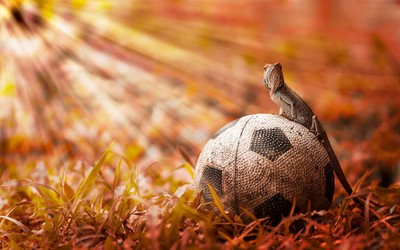 Iguana on a football wallpaper